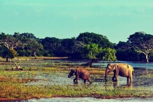 Wildlife in Yala National Park, Sri Lanka