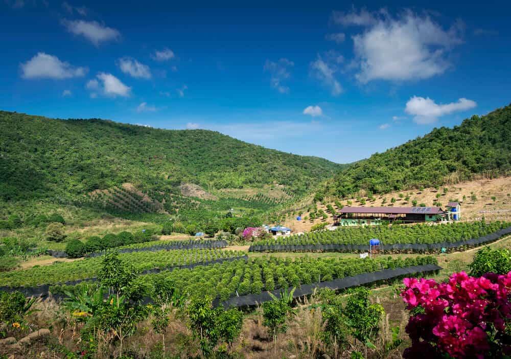 Cambodia Pepper Farm Kampot Southeast Asia Itinerary
